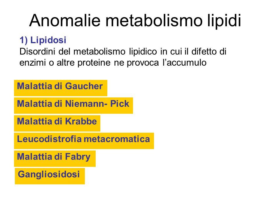 Anomalie metabolismo lipidi Malattia di Gaucher Malattia di Niemann- Pick Malattia di Krabbe 1) Lipidosi Disordini del metabolismo lipidico in cui il difetto di enzimi o altre proteine ne provoca laccumulo Leucodistrofia metacromatica Gangliosidosi Malattia di Fabry