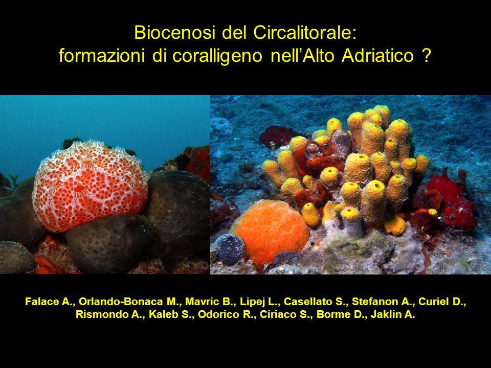 Falace A., Orlando-Bonaca M., Mavric B., Lipej L., Casellato S., Stefanon A., Curiel D., Rismondo A., Kaleb S., Odorico R., Ciriaco S., Borme D., Jakl