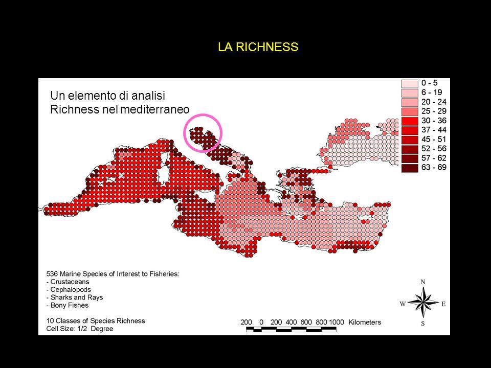 Un elemento di analisi Richness nel mediterraneo LA RICHNESS