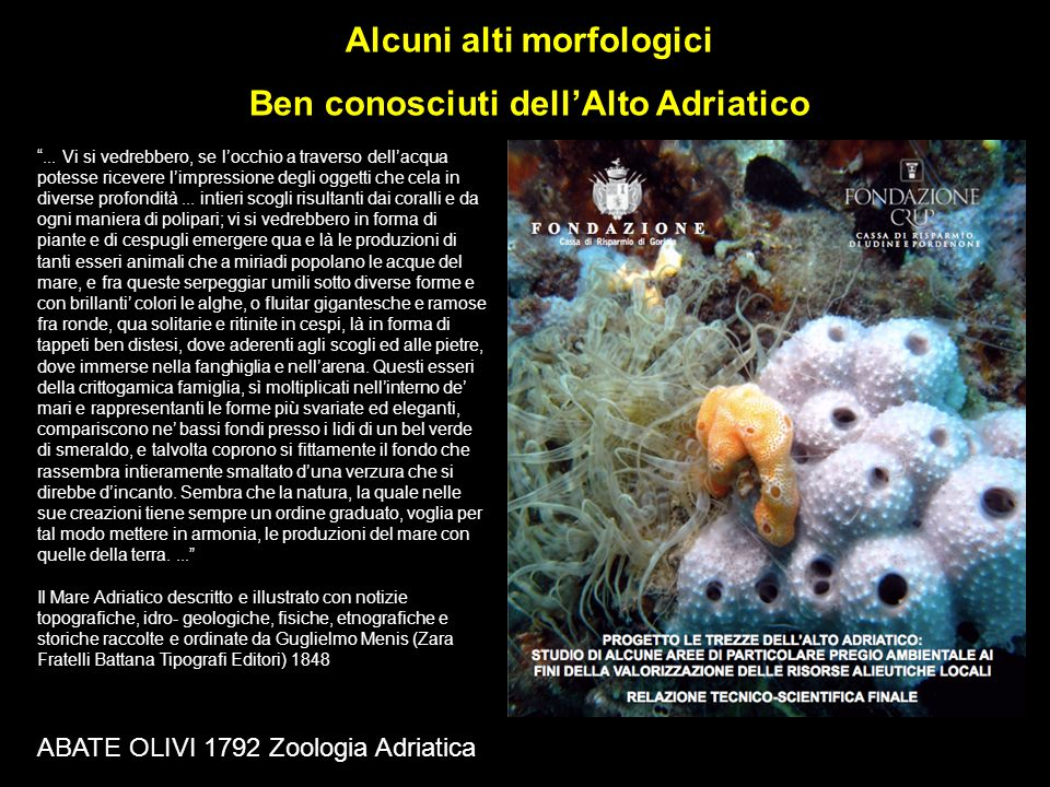 Alcuni alti morfologici Ben conosciuti dellAlto Adriatico ABATE OLIVI 1792 Zoologia Adriatica... Vi si vedrebbero, se locchio a traverso dellacqua pot