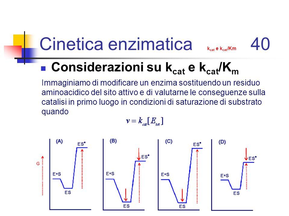 Cinetica enzimatica k cat e k cat /Km 40 Considerazioni su k cat e k cat /K m Immaginiamo di modificare un enzima sostituendo un residuo aminoacidico