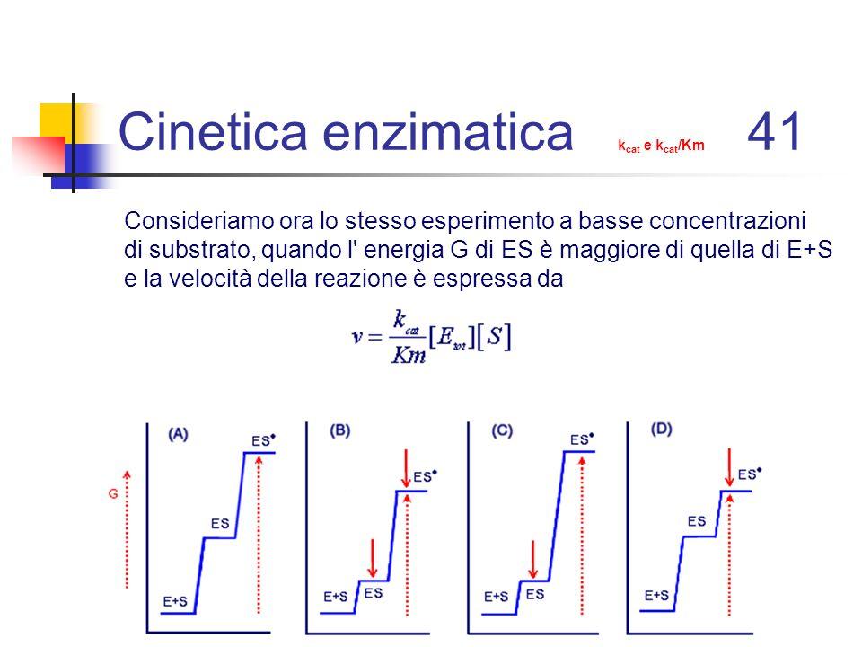 Cinetica enzimatica k cat e k cat /Km 41 Consideriamo ora lo stesso esperimento a basse concentrazioni di substrato, quando l' energia G di ES è maggi