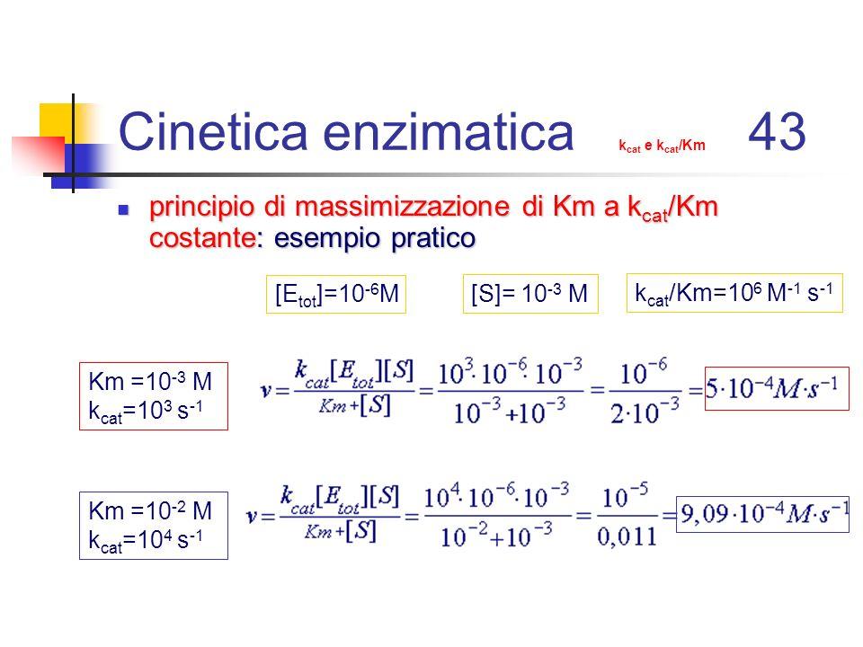 Cinetica enzimatica k cat e k cat /Km 43 principio di massimizzazione di Km a k cat /Km costante: esempio pratico principio di massimizzazione di Km a