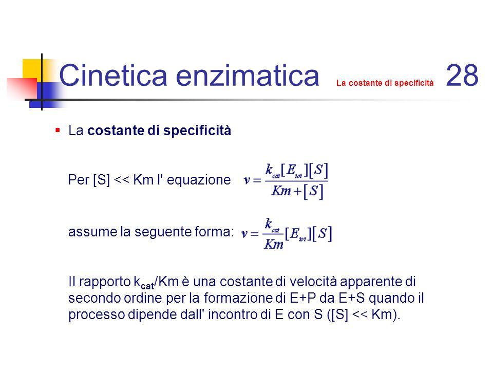 Cinetica enzimatica La costante di specificità 29 Per reazioni che seguano un meccanismo di stato stazionario: Quando k 3 >>k 2 la relazione si semplifica in: in queste condizioni k cat /Km è uguale alla costante cinetica k 1 : la velocità di reazione è vicina alla velocità dell incontro controllato dalla diffusione del substrato sull enzima ed è quindi la più elevata possibile