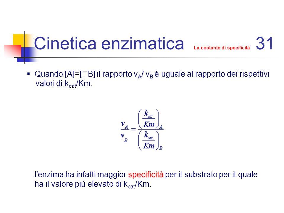 Cinetica enzimatica cinetica in accumulo di intermedio 32 Alcuni enzimi,come la chimotripsina,procedono con un meccanismo di questo tipo: Dal primo complesso ES si libera velocemente un primo prodotto P 1 mentre il complesso ES tende ad accumularsi in quanto la costante cinetica di trasformazione in E e P 2 risulta più piccola della costante cinetica di trasformazione del complesso ES in ES ( k 4 <<k 3 ).