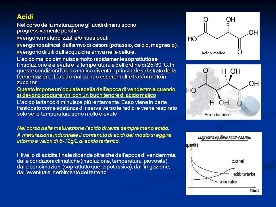 Acidi Nel corso della maturazione gli acidi diminuiscono progressivamente perché: vengono metabolizzati e/o ritraslocati, vengono metabolizzati e/o ri