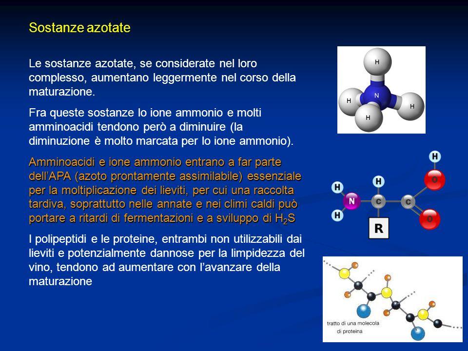 Sostanze azotate Le sostanze azotate, se considerate nel loro complesso, aumentano leggermente nel corso della maturazione. Fra queste sostanze lo ion