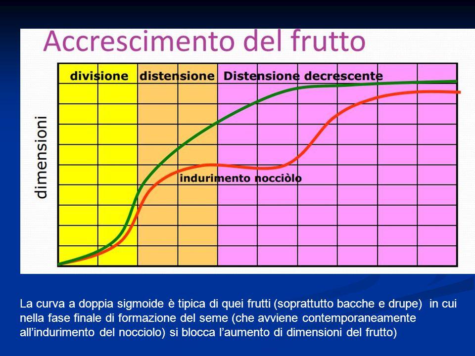 La curva a doppia sigmoide è tipica di quei frutti (soprattutto bacche e drupe) in cui nella fase finale di formazione del seme (che avviene contempor