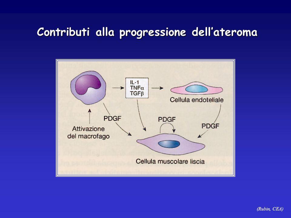 (Rubin, CEA) Contributi alla progressione dellateroma