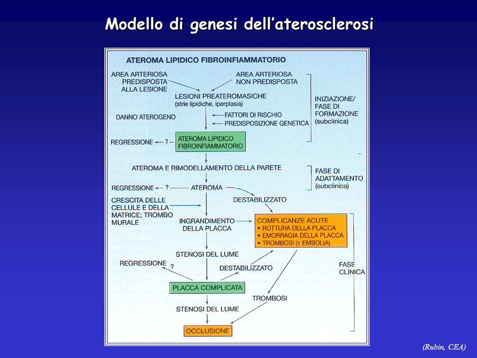 (Rubin, CEA) Modello di genesi dellaterosclerosi