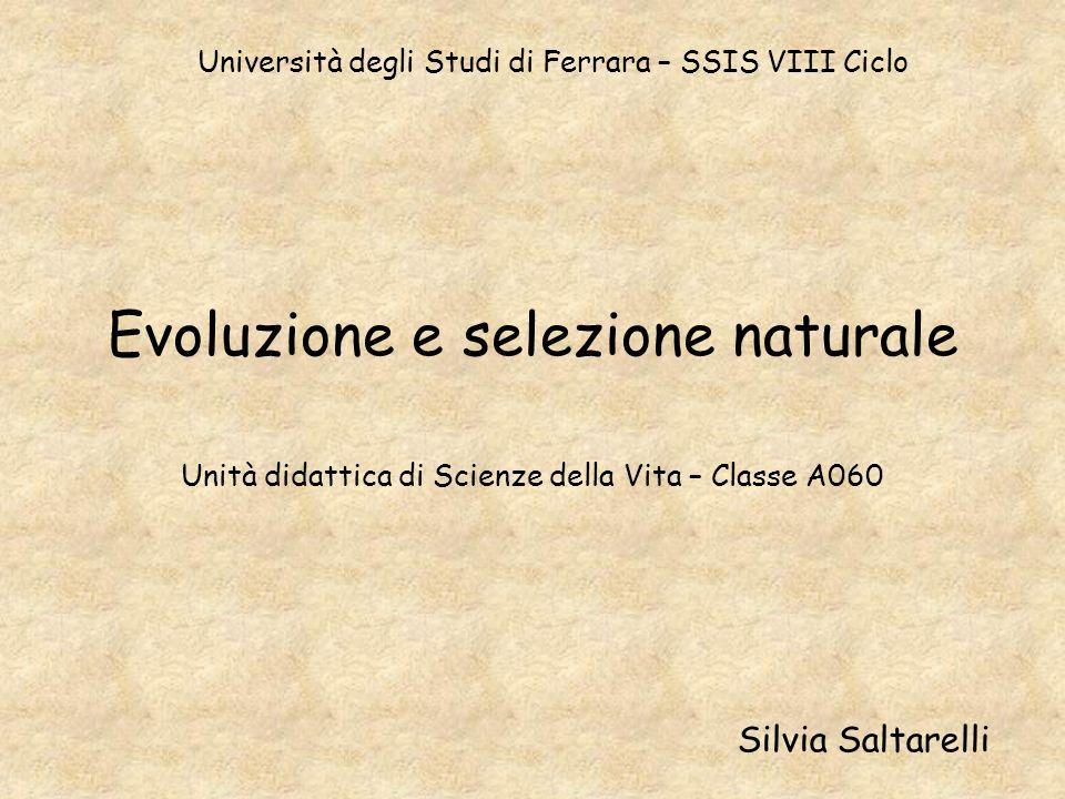 Evoluzione e selezione naturale Unità didattica di Scienze della Vita – Classe A060 Silvia Saltarelli Università degli Studi di Ferrara – SSIS VIII Ci