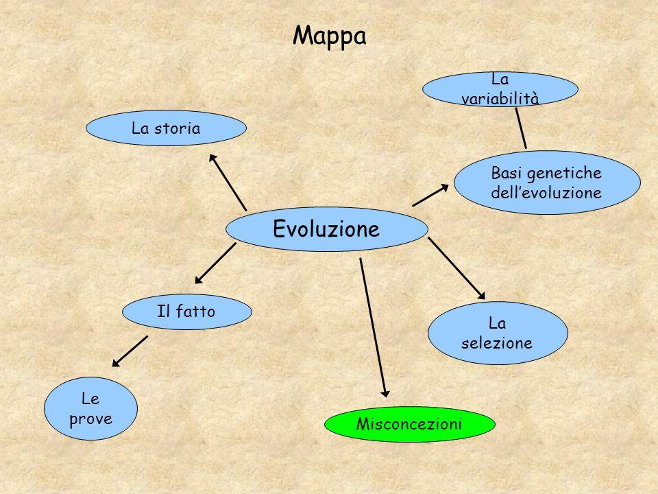 Mappa Evoluzione Il fatto Le prove La storia La variabilità La selezione Basi genetiche dellevoluzione Misconcezioni