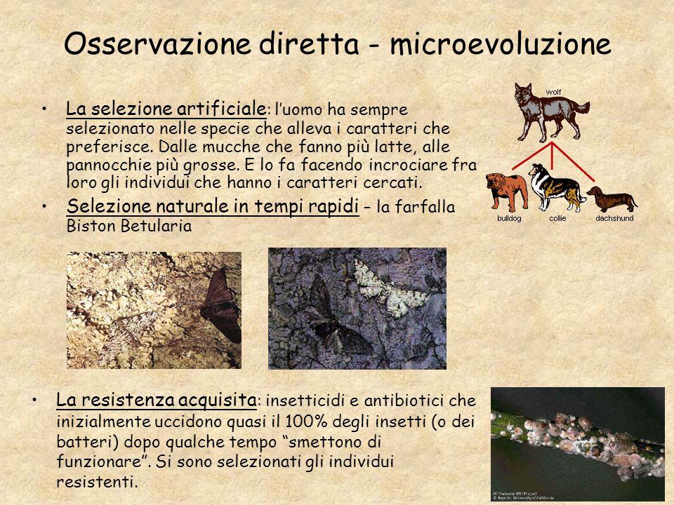 Osservazione diretta - microevoluzione La selezione artificiale : luomo ha sempre selezionato nelle specie che alleva i caratteri che preferisce. Dall