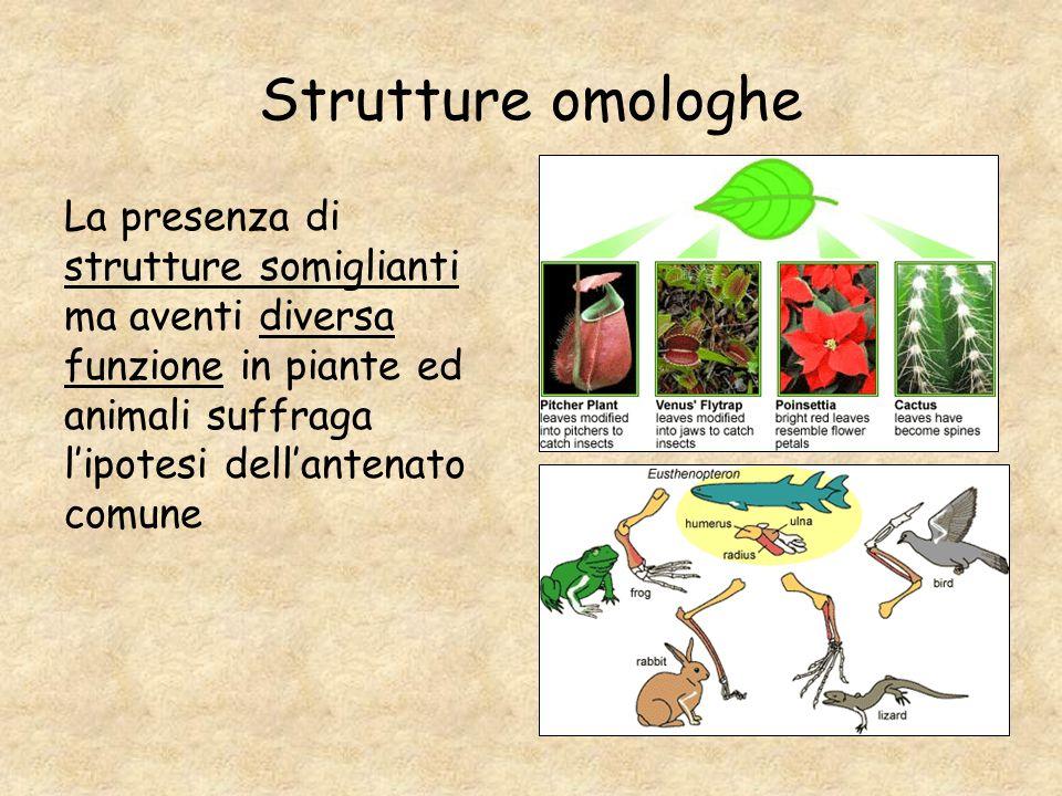 Strutture omologhe La presenza di strutture somiglianti ma aventi diversa funzione in piante ed animali suffraga lipotesi dellantenato comune