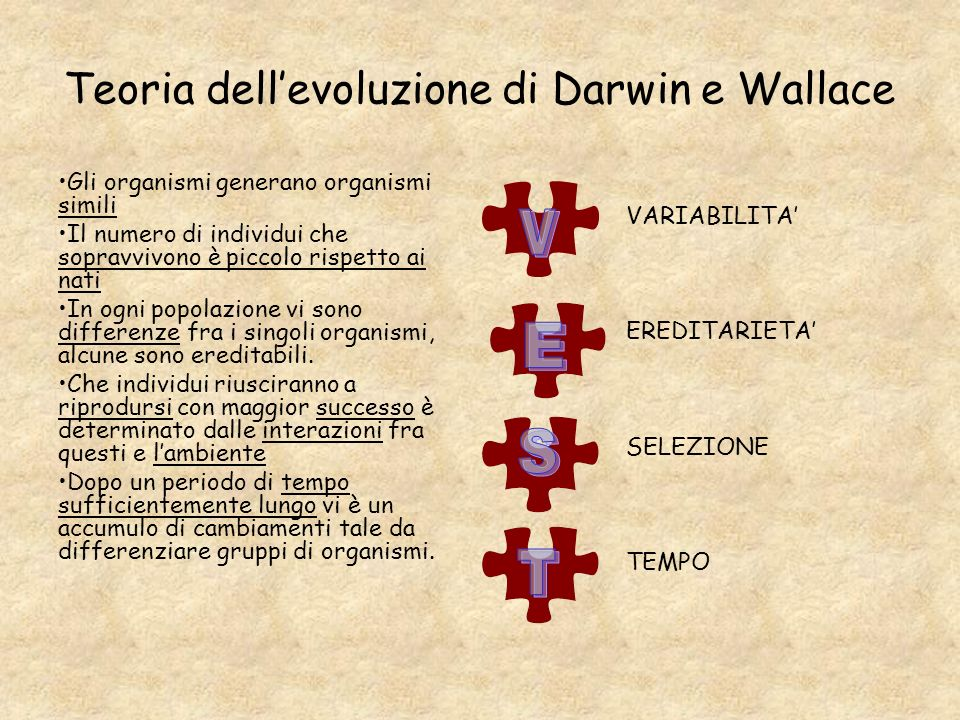 Teoria dellevoluzione di Darwin e Wallace Gli organismi generano organismi simili Il numero di individui che sopravvivono è piccolo rispetto ai nati I