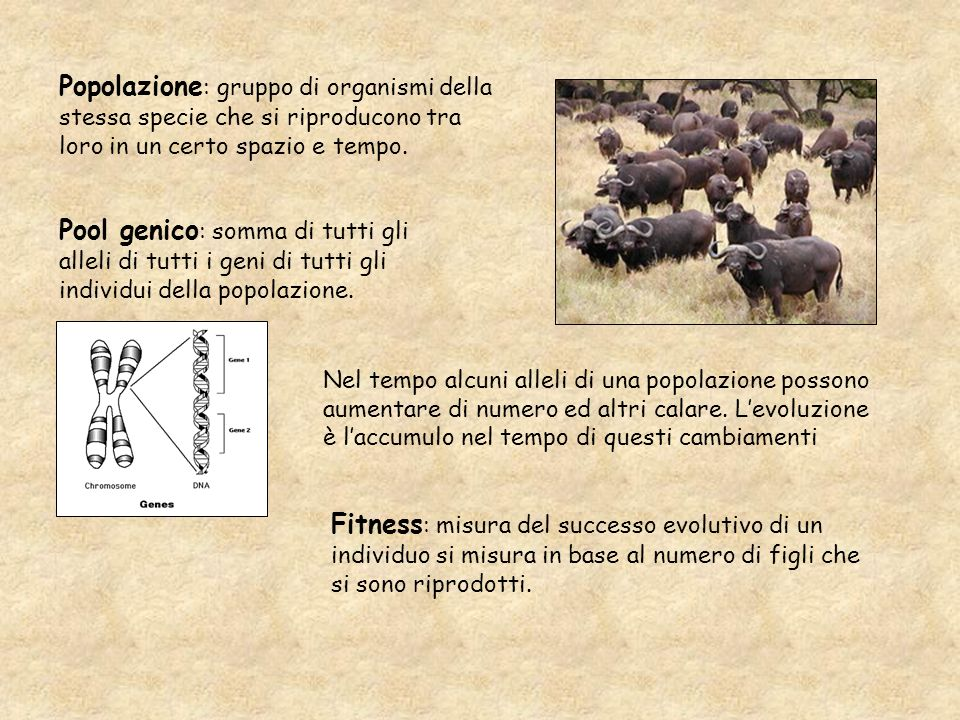 Popolazione : gruppo di organismi della stessa specie che si riproducono tra loro in un certo spazio e tempo. Pool genico : somma di tutti gli alleli