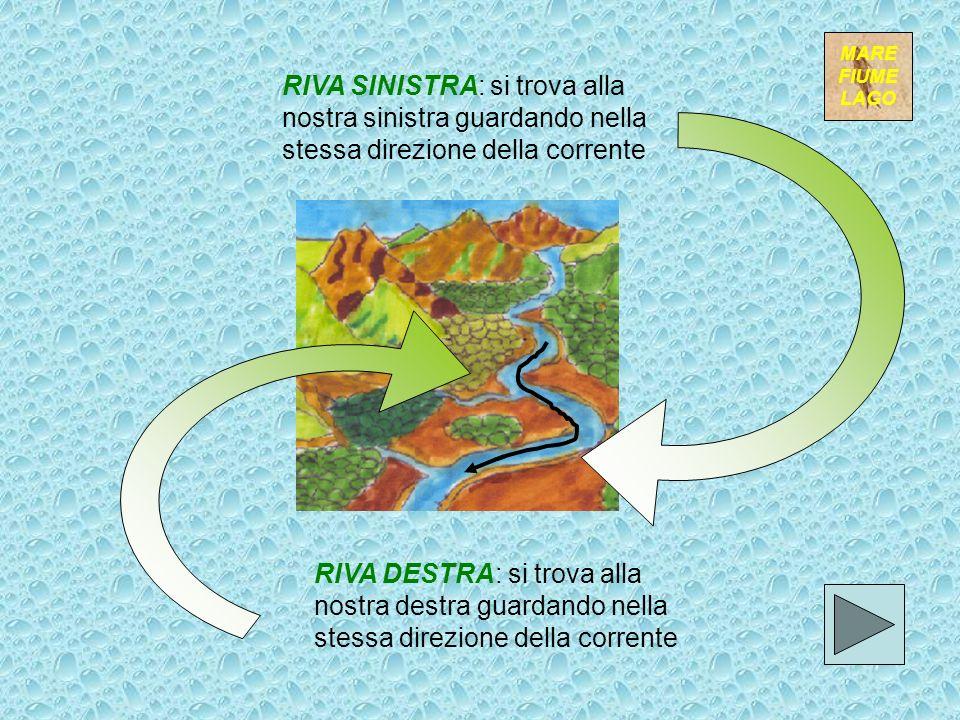 LETTO o ALVEO: è il solco o incavo in cui scorrono le acque del fiume SPONDE o RIVE: bordi rialzati che delimitano il letto sui due lati; se sono arti