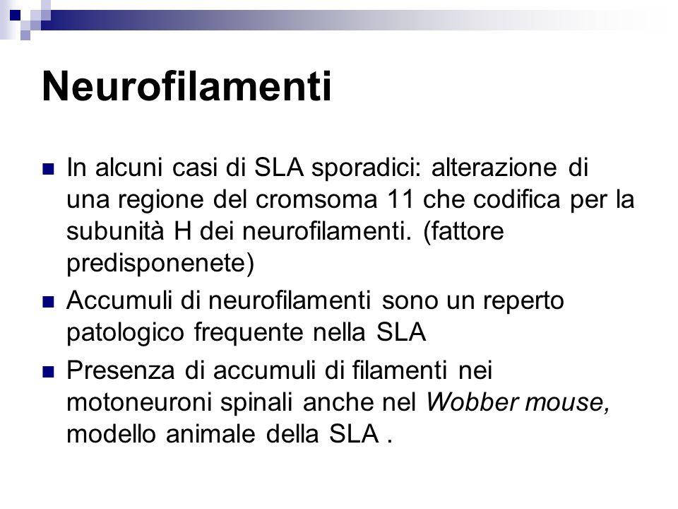 Neurofilamenti In alcuni casi di SLA sporadici: alterazione di una regione del cromsoma 11 che codifica per la subunità H dei neurofilamenti. (fattore