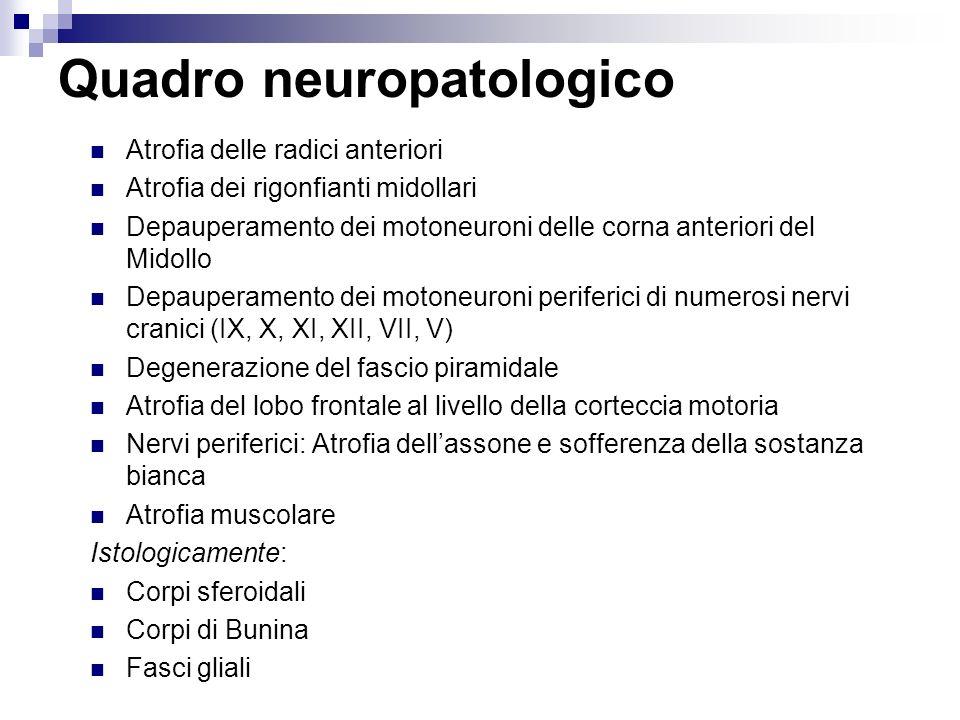 Quadro clinico comune in fase intermedia Segni di lesione periferica agli arti superiori (atrofia, paralisi flaccida, fascicolazioni ed areflessia) Segni di lesione centrale (piramidale) agli arti inferiori (spasticità, iperreflessia, normale trofismo muscolare) Segni di lesione periferica nei nervi cranici, soprattutto bulbari (IX-X-XI-XII) con paralisi labio-glosso-laringea.