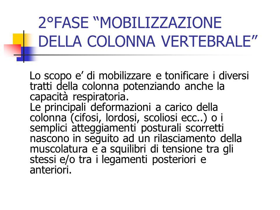 2°FASE MOBILIZZAZIONE DELLA COLONNA VERTEBRALE Lo scopo e di mobilizzare e tonificare i diversi tratti della colonna potenziando anche la capacità res