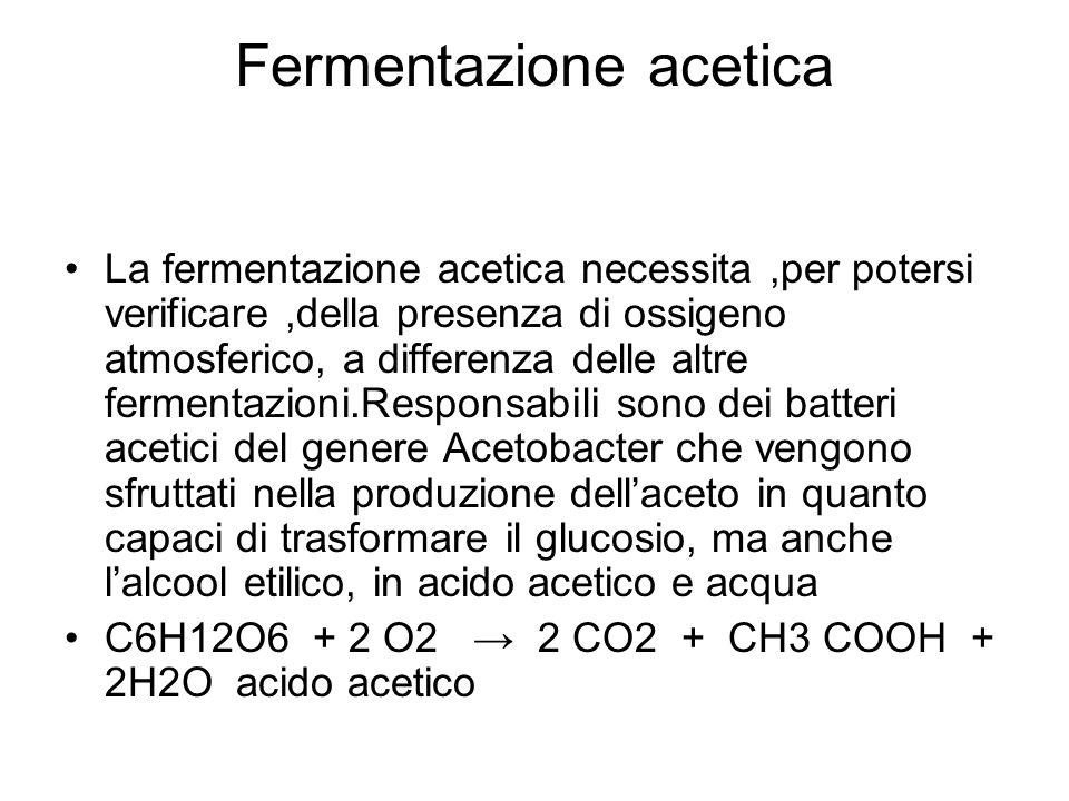 Fermentazione acetica La fermentazione acetica necessita,per potersi verificare,della presenza di ossigeno atmosferico, a differenza delle altre fermentazioni.Responsabili sono dei batteri acetici del genere Acetobacter che vengono sfruttati nella produzione dellaceto in quanto capaci di trasformare il glucosio, ma anche lalcool etilico, in acido acetico e acqua C6H12O6 + 2 O2 2 CO2 + CH3 COOH + 2H2O acido acetico