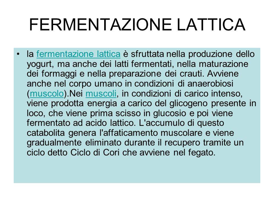 FERMENTAZIONE LATTICA la fermentazione lattica è sfruttata nella produzione dello yogurt, ma anche dei latti fermentati, nella maturazione dei formagg
