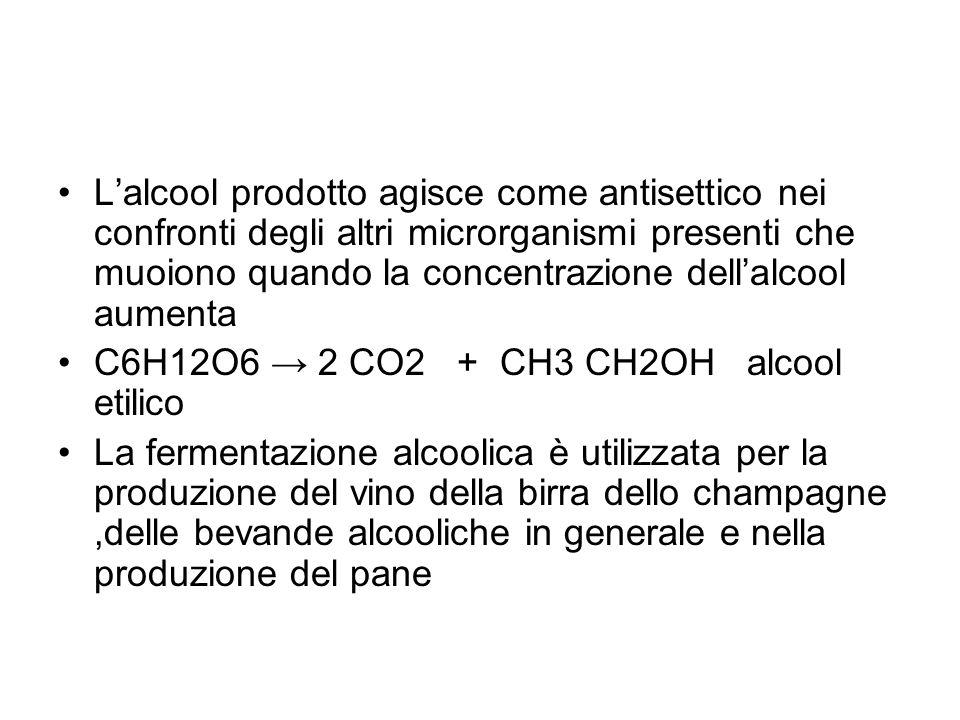 Lalcool prodotto agisce come antisettico nei confronti degli altri microrganismi presenti che muoiono quando la concentrazione dellalcool aumenta C6H1