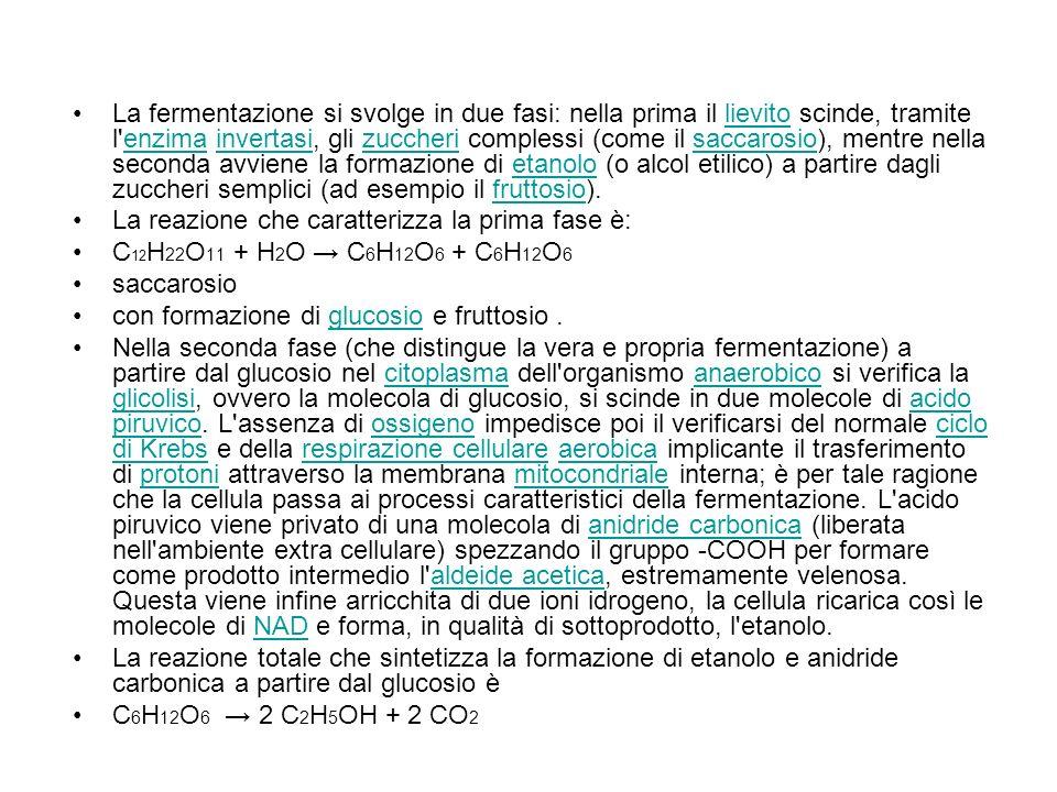 La fermentazione si svolge in due fasi: nella prima il lievito scinde, tramite l enzima invertasi, gli zuccheri complessi (come il saccarosio), mentre nella seconda avviene la formazione di etanolo (o alcol etilico) a partire dagli zuccheri semplici (ad esempio il fruttosio).lievitoenzimainvertasizuccherisaccarosioetanolofruttosio La reazione che caratterizza la prima fase è: C 12 H 22 O 11 + H 2 O C 6 H 12 O 6 + C 6 H 12 O 6 saccarosio con formazione di glucosio e fruttosio.glucosio Nella seconda fase (che distingue la vera e propria fermentazione) a partire dal glucosio nel citoplasma dell organismo anaerobico si verifica la glicolisi, ovvero la molecola di glucosio, si scinde in due molecole di acido piruvico.