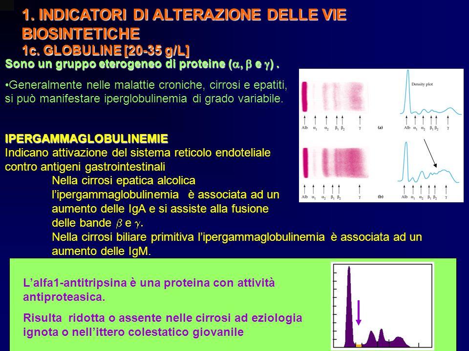 1. INDICATORI DI ALTERAZIONE DELLE VIE BIOSINTETICHE 1c. GLOBULINE [20-35 g/L] Sono un gruppo eterogeneo di proteine ( e ). Generalmente nelle malatti