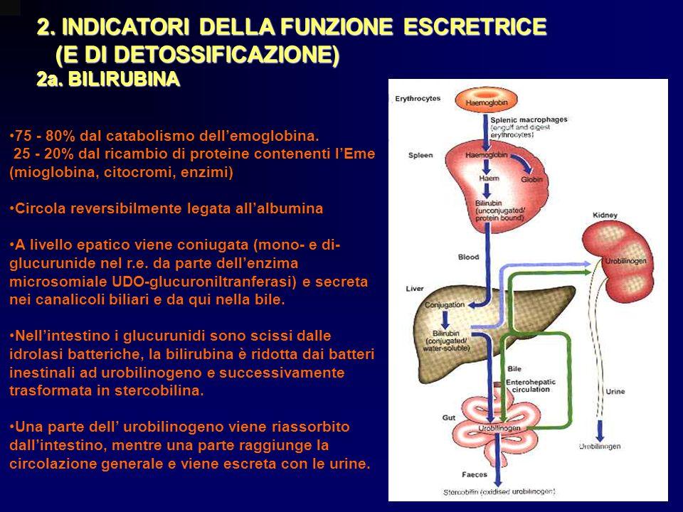2. INDICATORI DELLA FUNZIONE ESCRETRICE (E DI DETOSSIFICAZIONE) (E DI DETOSSIFICAZIONE) 2a. BILIRUBINA 75 - 80% dal catabolismo dellemoglobina. 25 - 2