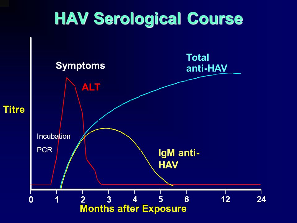 0123 4561224 HAV Serological Course Total anti-HAV IgM anti- HAV ALT Titre Months after Exposure Symptoms Incubation PCR