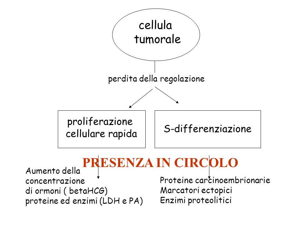 cellula tumorale proliferazione cellulare rapida S-differenziazione Aumento della concentrazione di ormoni ( betaHCG) proteine ed enzimi (LDH e PA) Pr