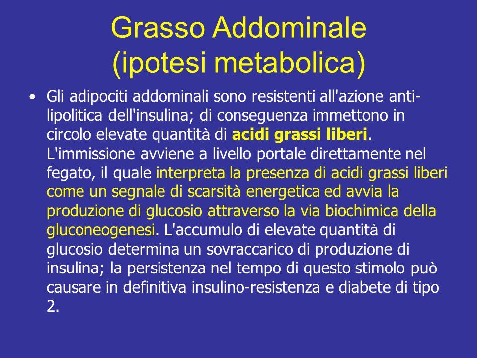 Grasso Addominale (ipotesi metabolica) Gli adipociti addominali sono resistenti all azione anti- lipolitica dell insulina; di conseguenza immettono in circolo elevate quantit à di acidi grassi liberi.