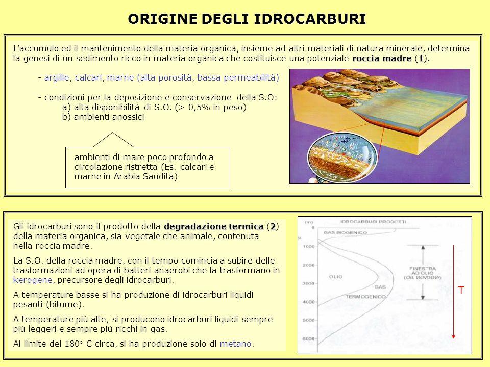 Laccumulo ed il mantenimento della materia organica, insieme ad altri materiali di natura minerale, determina roccia madre1 la genesi di un sedimento