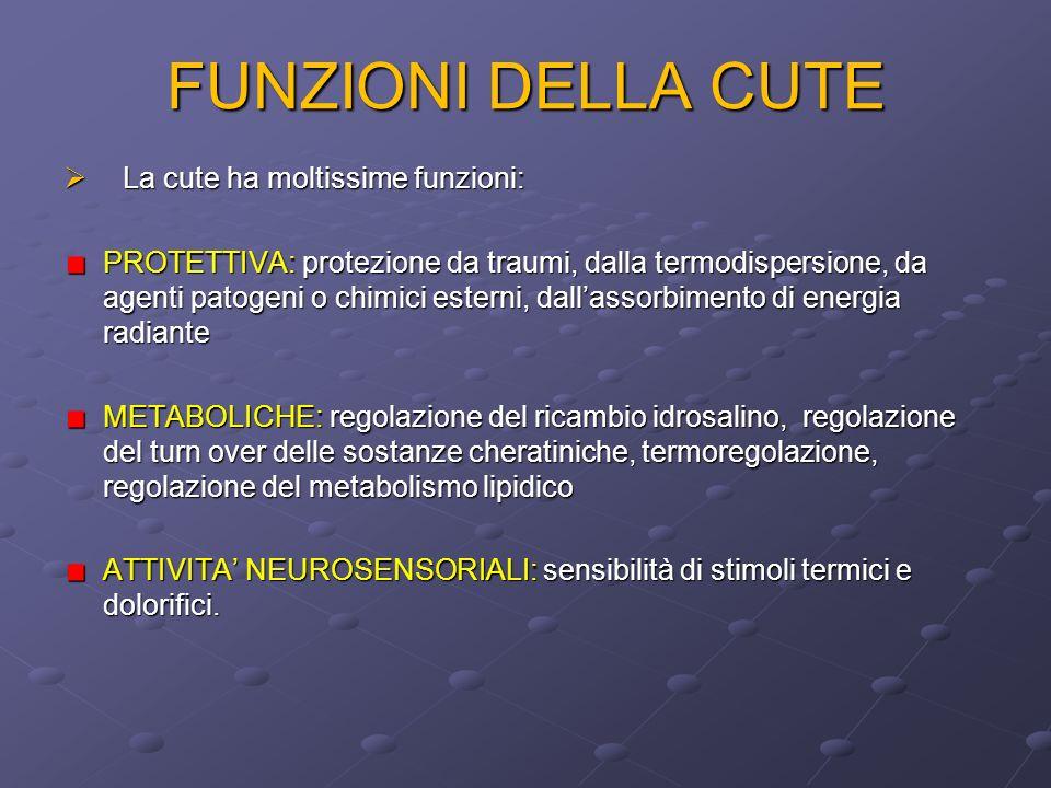 FUNZIONI DELLA CUTE La cute ha moltissime funzioni: La cute ha moltissime funzioni: PROTETTIVA: protezione da traumi, dalla termodispersione, da agent