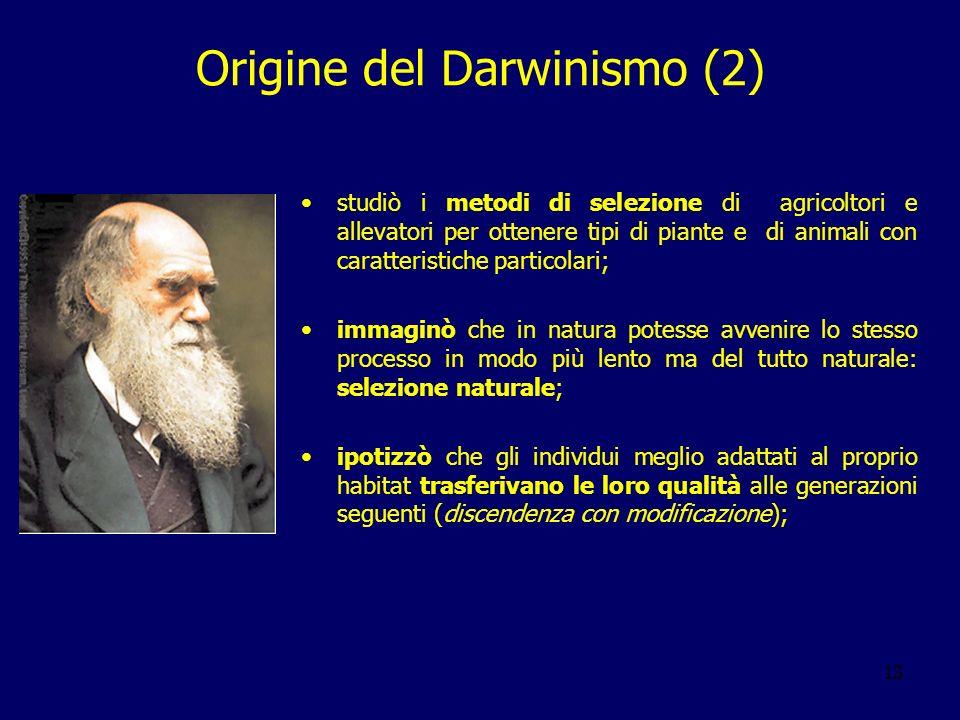 13 Origine del Darwinismo (2) studiò i metodi di selezione di agricoltori e allevatori per ottenere tipi di piante e di animali con caratteristiche pa