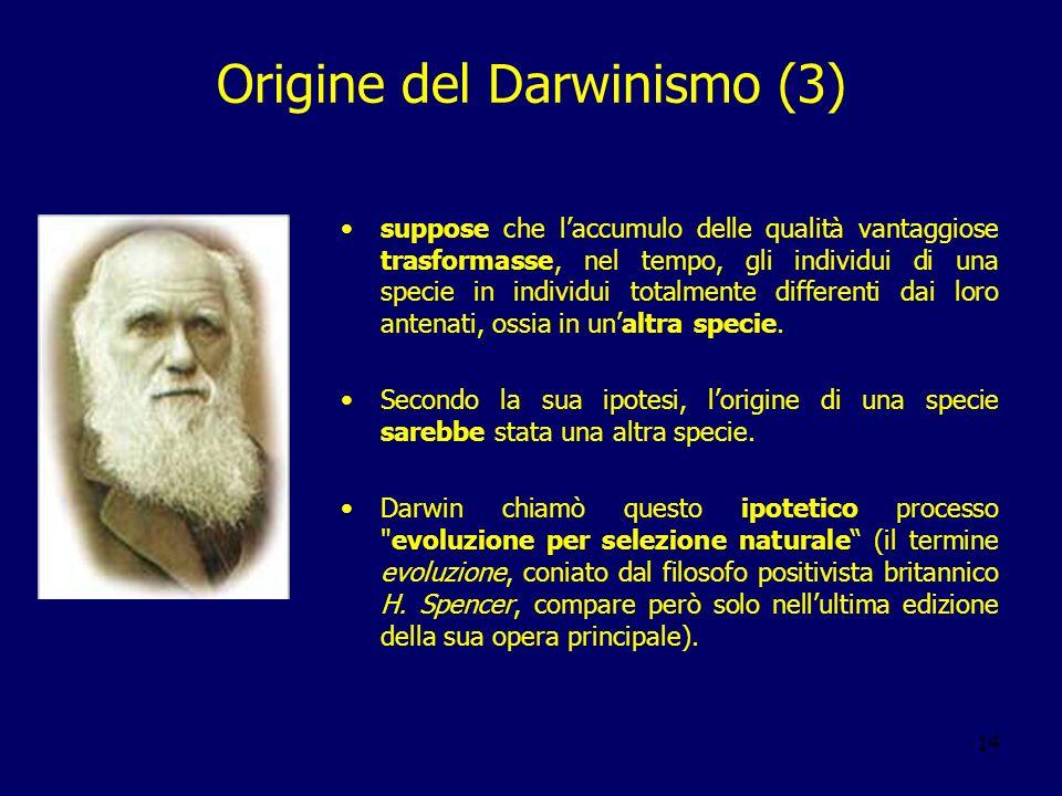 14 Origine del Darwinismo (3) suppose che laccumulo delle qualità vantaggiose trasformasse, nel tempo, gli individui di una specie in individui totalm