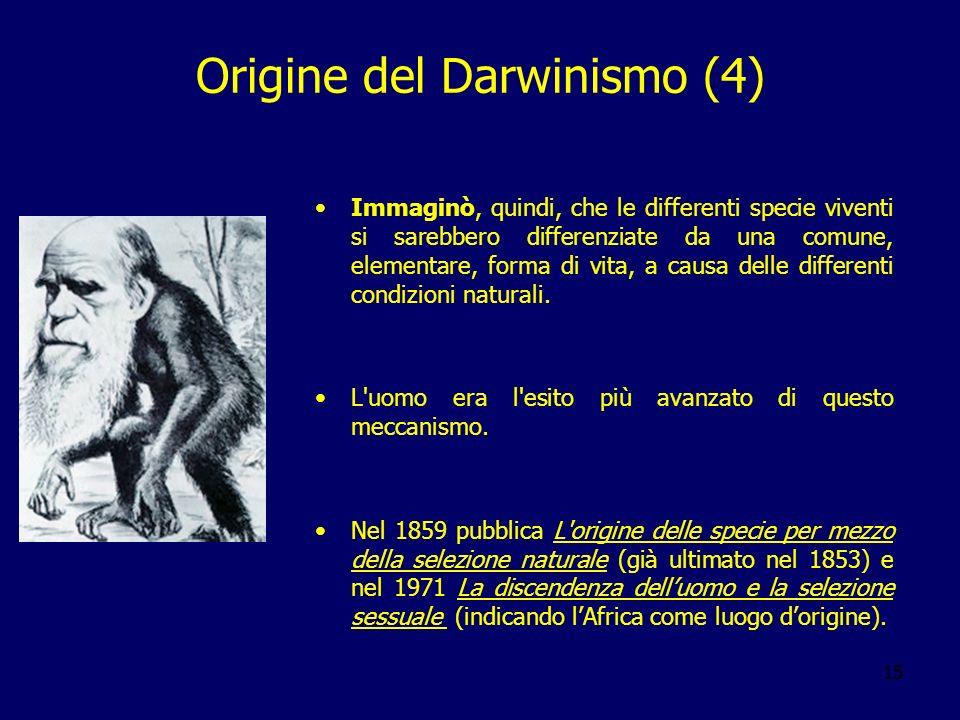 15 Origine del Darwinismo (4) Immaginò, quindi, che le differenti specie viventi si sarebbero differenziate da una comune, elementare, forma di vita,