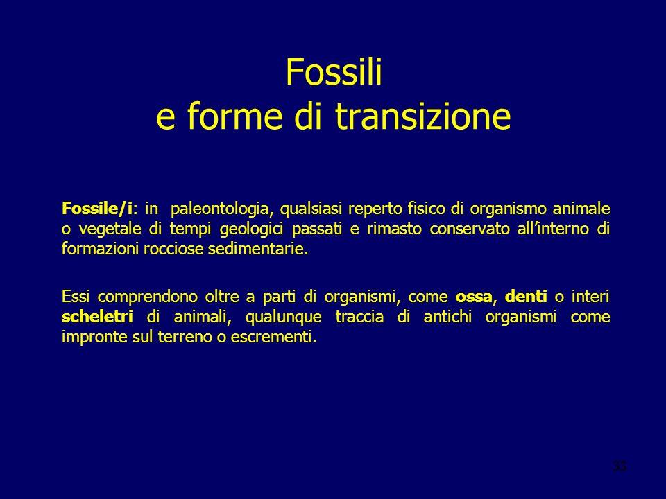 33 Fossili e forme di transizione Fossile/i: in paleontologia, qualsiasi reperto fisico di organismo animale o vegetale di tempi geologici passati e r