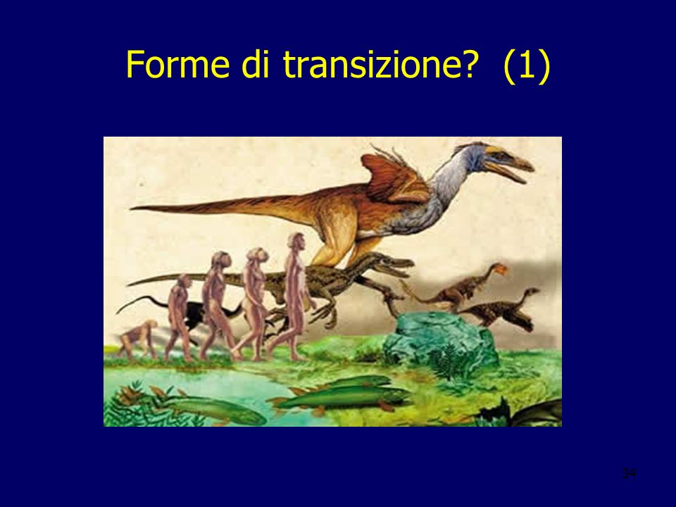 34 Forme di transizione? (1)