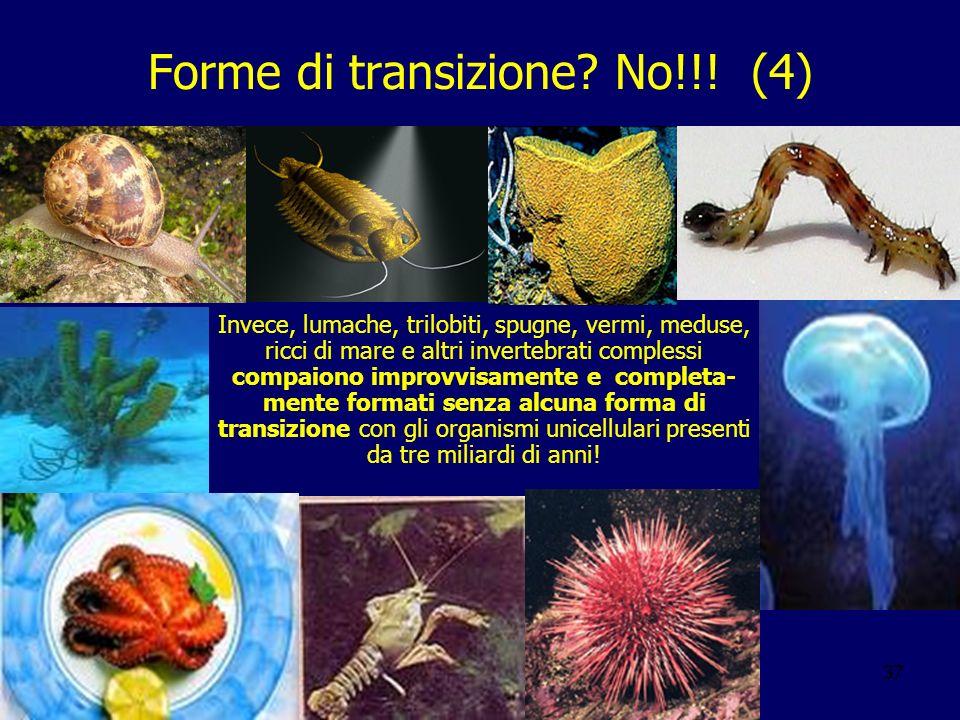 37 Forme di transizione? No!!! (4) Invece, lumache, trilobiti, spugne, vermi, meduse, ricci di mare e altri invertebrati complessi compaiono improvvis
