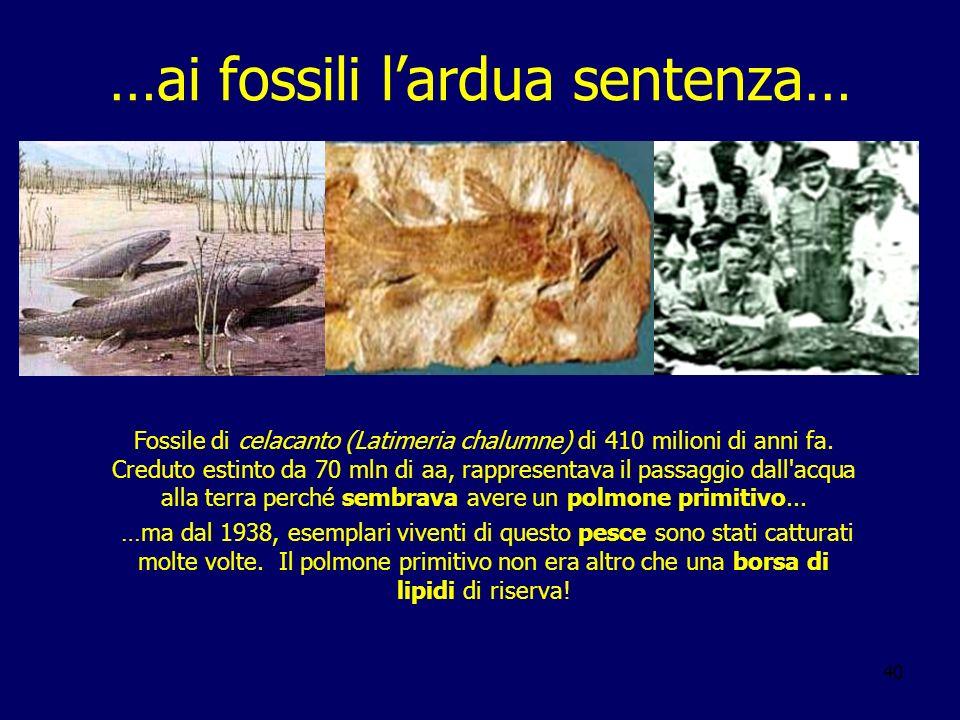 40 …ai fossili lardua sentenza… Fossile di celacanto (Latimeria chalumne) di 410 milioni di anni fa. Creduto estinto da 70 mln di aa, rappresentava il