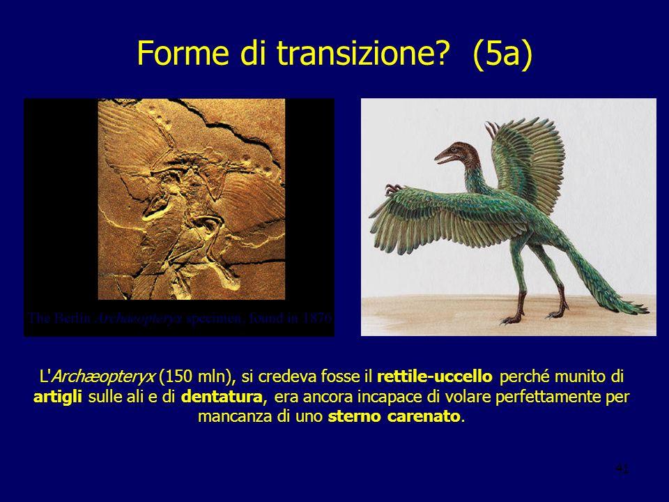 41 Forme di transizione? (5a) L'Archæopteryx (150 mln), si credeva fosse il rettile-uccello perché munito di artigli sulle ali e di dentatura, era anc