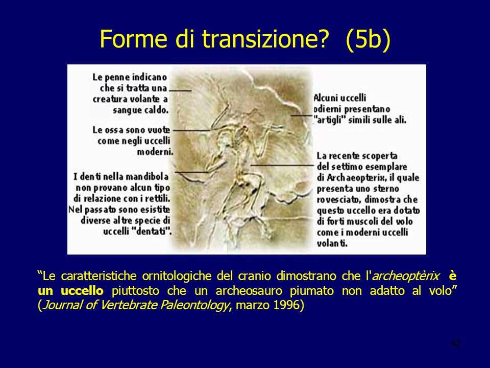 42 Forme di transizione? (5b) Le caratteristiche ornitologiche del cranio dimostrano che l'archeoptèrix è un uccello piuttosto che un archeosauro pium