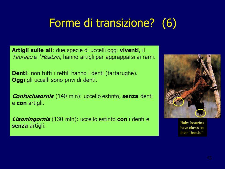 43 Forme di transizione? (6) Artigli sulle ali: due specie di uccelli oggi viventi, il Tauraco e l'Hoatzin, hanno artigli per aggrapparsi ai rami. Den