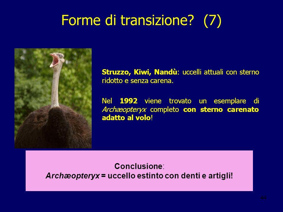 44 Struzzo, Kiwi, Nandù: uccelli attuali con sterno ridotto e senza carena. Nel 1992 viene trovato un esemplare di Archæopteryx completo con sterno ca