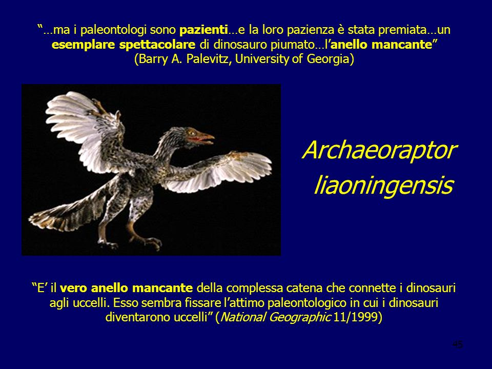 45 …ma i paleontologi sono pazienti…e la loro pazienza è stata premiata…un esemplare spettacolare di dinosauro piumato…lanello mancante (Barry A. Pale