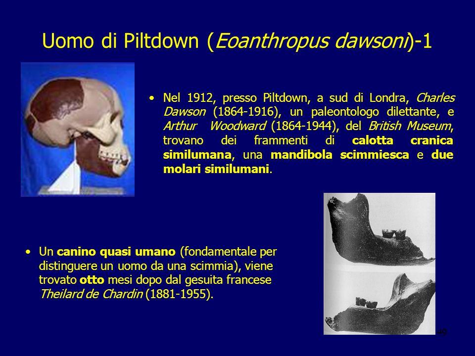 49 Uomo di Piltdown (Eoanthropus dawsoni)-1 Nel 1912, presso Piltdown, a sud di Londra, Charles Dawson (1864-1916), un paleontologo dilettante, e Arth