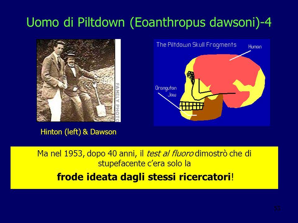 53 Uomo di Piltdown (Eoanthropus dawsoni)-4 Ma nel 1953, dopo 40 anni, il test al fluoro dimostrò che di stupefacente cera solo la frode ideata dagli