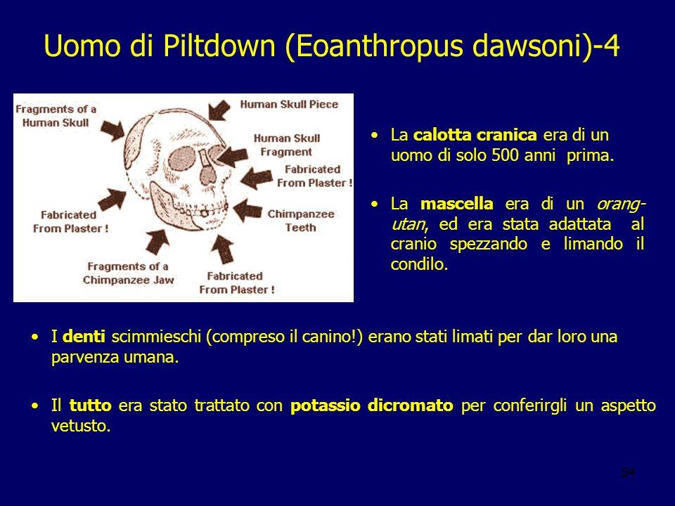 54 Uomo di Piltdown (Eoanthropus dawsoni)-4 La calotta cranica era di un uomo di solo 500 anni prima. La mascella era di un orang- utan, ed era stata